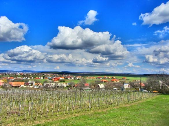 Etyek vineyards