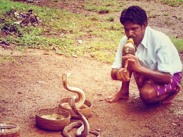 Snake charmer, Cochin, Kerala, India