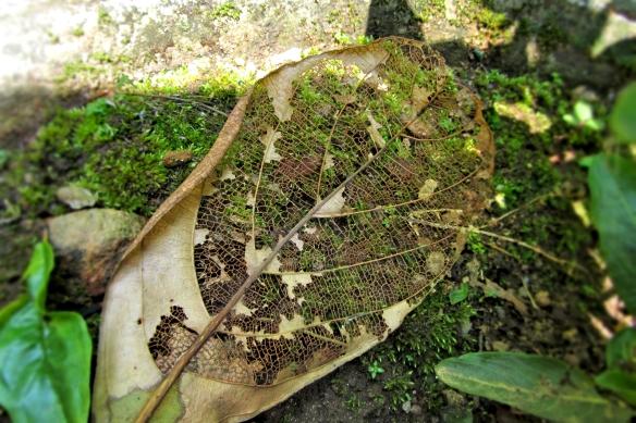 Converge of a fallen leaf