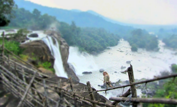 Monkey at Athirapally waterfall Kerala India