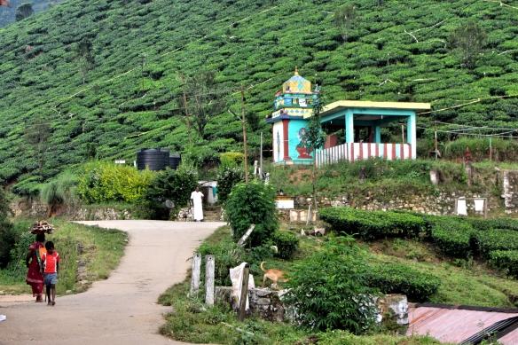 Tea estate temple Munnar Kerala India