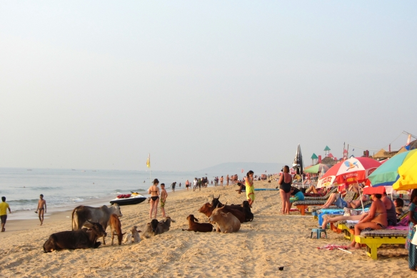 Vaddie beach Goa India