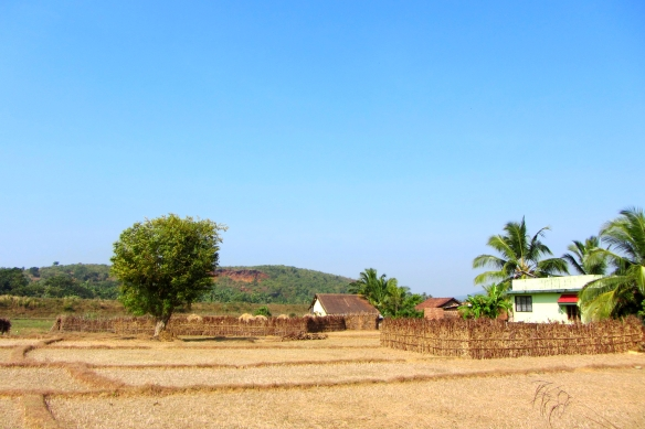 Karwar fields india